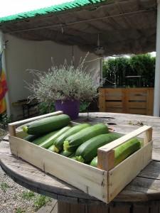 zucchine bio a km 1
