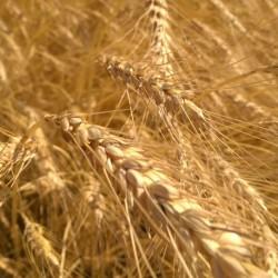 Gentil Rosso – agricoltura bio urbana