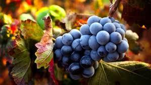 vini e vignaioli: il gruve