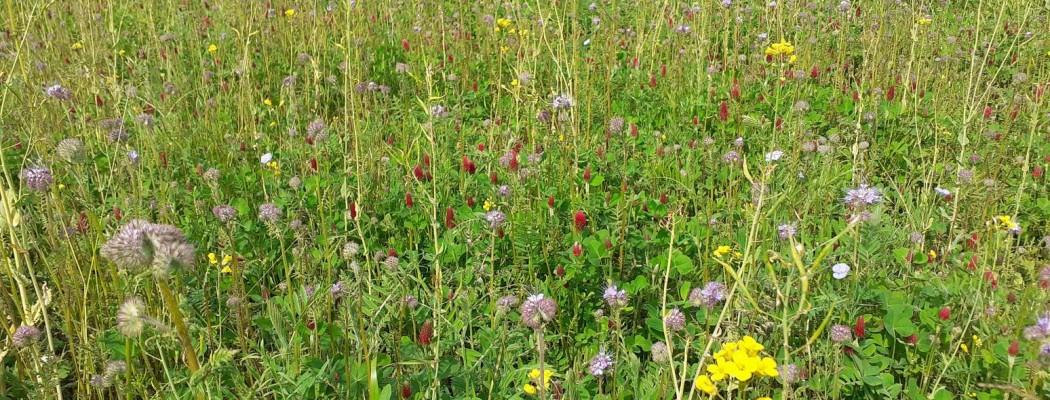 fiori Terre Prossime
